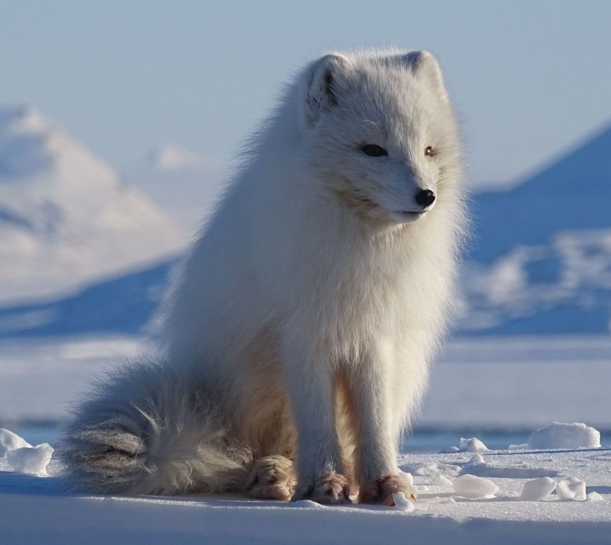 2018-03-24_11-53-14 Svalbard Field Trial GWE Fox